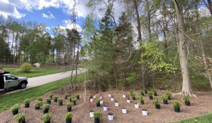 Midlothian, Virginia Landscape Design Companies