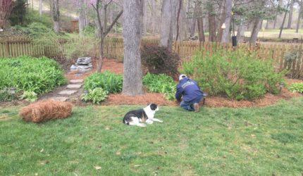 Williamsburg, Virginia Landscape Maintenance